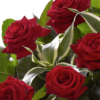 Heavenly Red Rose Hand tied 04