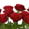 Ultimate 100 Grand Prix Rose Hand tied 06