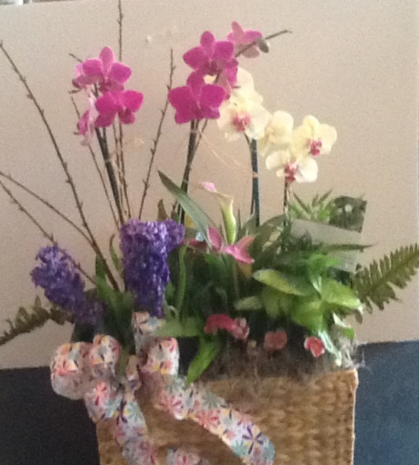 Orchids in a box