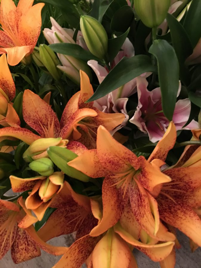 Asian Lilies